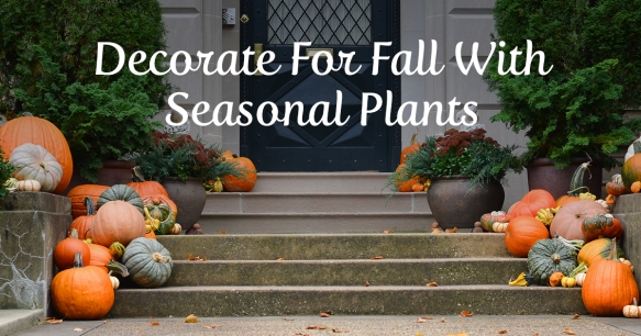 Porch Decorated for Fall with Plants